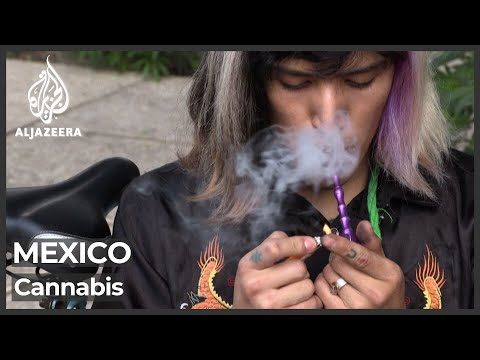 Mexico decriminalises recreational marijuana 1