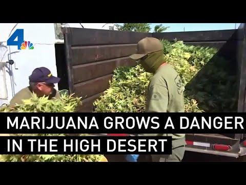 Marijuana Grow Operations Are a Danger in the High Desert   NBCLA 1