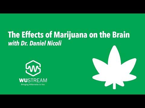 The Effects of Marijuana on the Brain with Dr. Daniel Nicoli 1