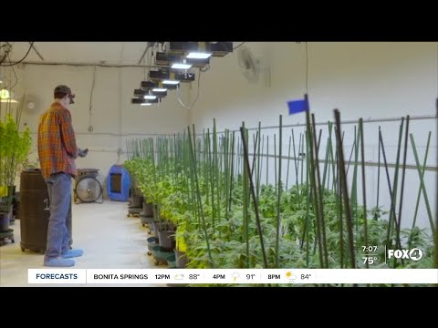 Federal laws on Marijuana being questioned 1
