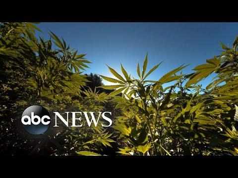 Debate over marijuana in sports grows amid Sha'Carri Richardson controversy 1