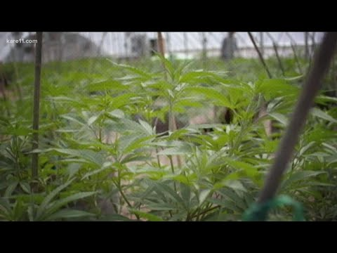 Democrats unveil proposal to end federal prohibition on marijuana 1