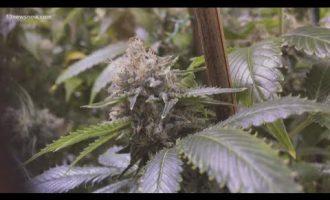Clarifying Virginia's new marijuana laws 10