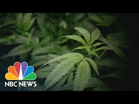 Dangers Of High Potency Cannabis For Teens 1