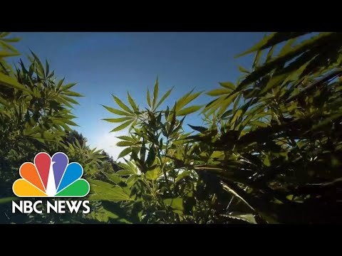 Medical Marijuana Patients Have More Questions Than Answers On Treatment 1