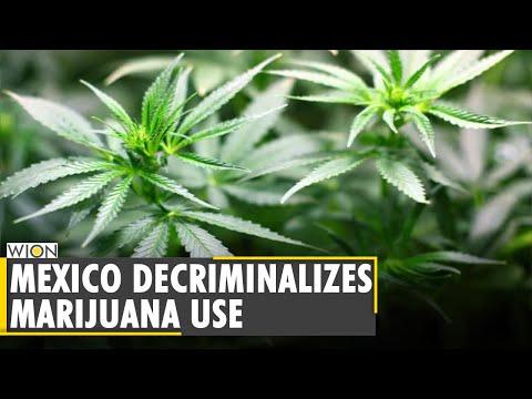 Mexico: Recreational Marijuana use decriminalised for adults   Latest World English News   WION News 1