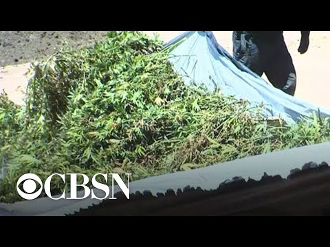 $1.19 billion worth of marijuana seized in massive drug bust in California 1