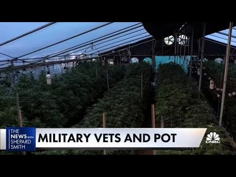Veterans push for marijuana reform 1