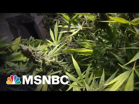 Senate Dems Propose Bill To Federally Decriminalize Marijuana 1