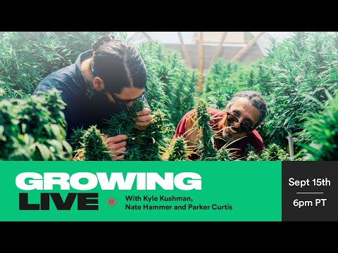 Growing Live with Kyle Kushman, Nate Hammer and Parker Curtis   September 15th 1
