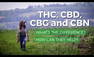 Marijuana THC vs CBD, CBG, CBN: What's the difference? What are health benefits of each? 2