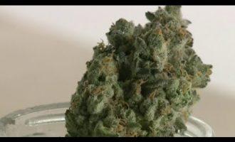 Proposed marijuana dispensary sparks debate in River Rouge 4