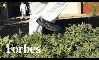 How California's Legal Cannabis Is Sold Illegally Across America | Forbes 8