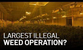 $10M Cash, 100K Plants Seized in East Bay Illegal Marijuana Operation: Sheriff 5